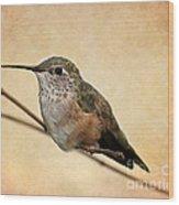 Tiny Hummingbird Resting Wood Print