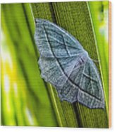 Tiny Moth On A Blade Of Grass Wood Print