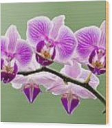 Tiny Orchid Faces Wood Print