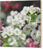 Tiny Pink And Tiny White Flowers 2 Wood Print