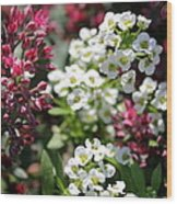Tiny Pink And Tiny White Flowers Wood Print