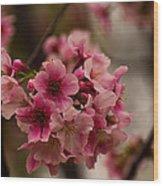 Tiny Pink Blossoms Wood Print