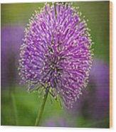 Tiny Purple Wildflower II Wood Print