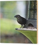 Tiny Seed For A Tiny Bird Wood Print