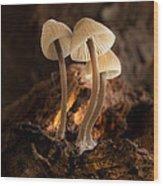 Tiny Toadstools Wood Print