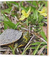 Tiny Turtle Close Up Wood Print
