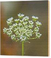 Tiny White Flowers Wood Print