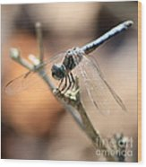 Tired Dragonfly Square Wood Print