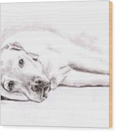 Tired Labrador Wood Print