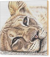 Tired Young Lion Wood Print