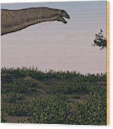Titanosaurus Standing Grazing In Swamp Wood Print