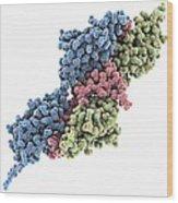 Titin-telethonin Complex, Molecular Wood Print