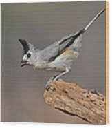 Titmouse Preparing For Takeoff Wood Print