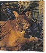 Tk0397, Thomas Kitchin Florida Panther Wood Print