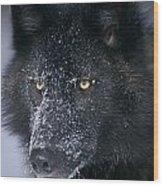 T.kitchin Tk1731e, Gray Wolf, Timber Wood Print