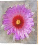 To Return To Innocence. Cactus Flower Wood Print by Jenny Rainbow