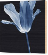 To The Light Tulip Flower In Blue Wood Print