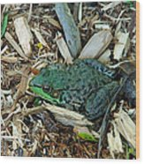 Toad Master Wood Print