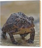 Toad Takes A Stance Wood Print