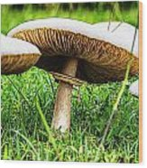 Toadstools V2 Wood Print