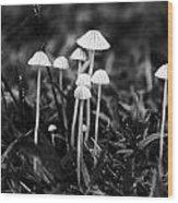 Toadstools V3 Wood Print