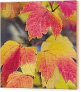 Toasted Autumn - Featured 3 Wood Print