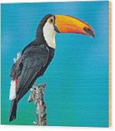 Toco Toucan Perched Wood Print