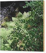 Tod Creek  Wood Print