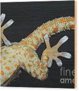 Tokay Gecko Feet Wood Print