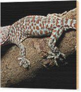 Tokay Gecko In Defensive Display Wood Print