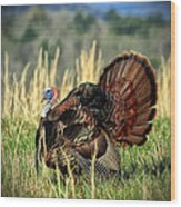 Tom Turkey Wood Print by Jaki Miller