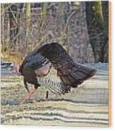 Tom Turkey Walking Wood Print