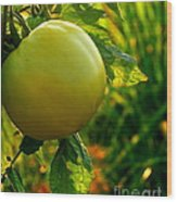 Tomato On The Vine Wood Print