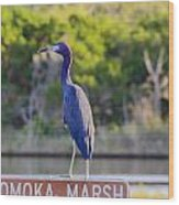 Tomoka Marsh Little Blue Heron Wood Print