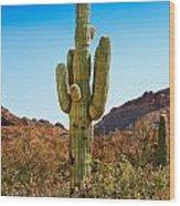 Tonto National Forest Saguaro Wood Print