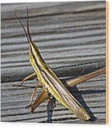Toothpick Grasshopper Wood Print
