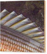 Top Fin Design Wood Print
