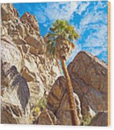Top Of A Palm Near Top Of Andreas Canyon-ca Wood Print