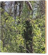 Top Of The Glades Wood Print