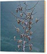 Topanga Canyon Flora #1 Wood Print