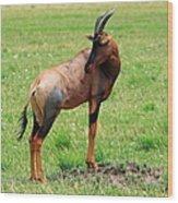 Topi Antelope On The Masai Mara Wood Print