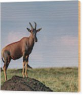 Topi Standing Guard On Termite Mound Wood Print