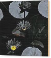 Torchlight Water Flowers Wood Print