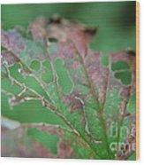 Torn Wood Print