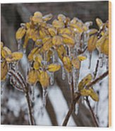 Toronto Ice Storm 2013 - My Garden In The Morning Wood Print