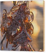 Toronto Ice Storm 2013 - Oak Leaves Jewelry Wood Print