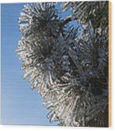Toronto Ice Storm 2013 - Pine Needle Flowers In The Sky Wood Print