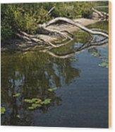 Toronto Islands Slow Cruising   Wood Print