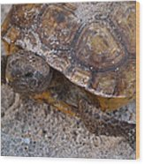 Tortoise By Nature Wood Print