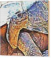 Tortoise Gouache Wood Print
